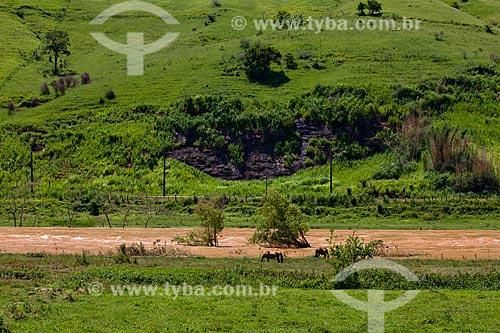 Assunto: Cavalos pastando às margens do Rio Paraíba do Sul  / Local:  próximo à Vassouras - Vale do Paraíba - Rio de Janeiro - RJ  / Data: janeiro 2011