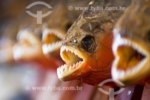 Assunto: Piranha (peixe) empalhada sendo vendida em feira de artesanato indígena / Local: Manaus - Amazonas - AM - Brasil / Data: 02/2011