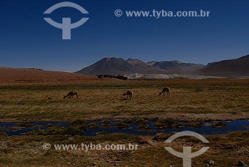 Assunto: Rio Putana  / Local: Chile - América do Sul / Data: 01/2011