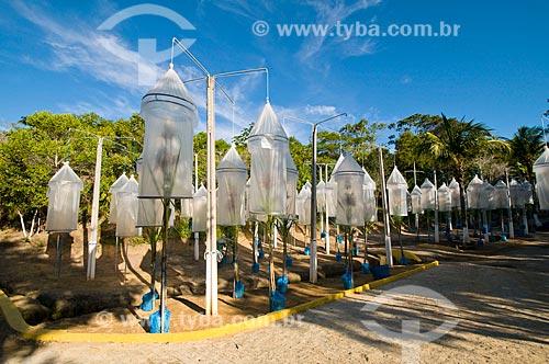 Assunto: Campânulas de cruzamento biparenteral de cana-de-açúcar / Local: Maceió - Alagoas (AL) - Brasil / Data: 05/2010