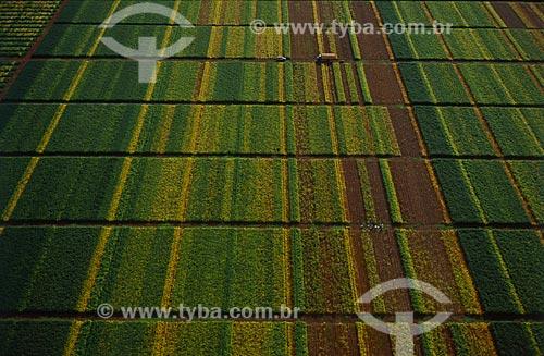 Assunto: Estação agronômica - produção de variedades de soja  / Local: Distrito Baús - Costa Rica - Mato Grosso do Sul (MS) - Brasil / Data: 2009