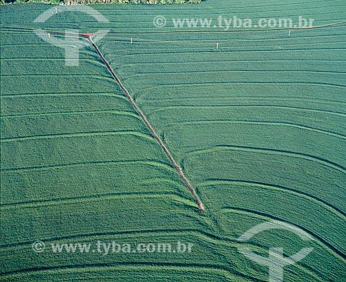 Assunto: Plantação de soja / Local: Campo Mourão - Paraná (PR) - Brasil / Data: 2009