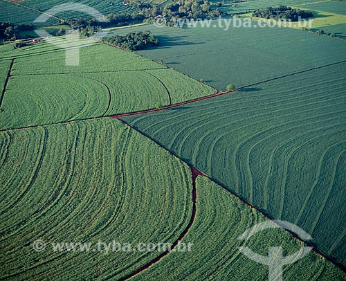 Assunto: Plantação de milho e soja / Local: Campo Mourão - Paraná (PR) - Brasil / Data: 2009