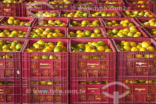 Assunto: Armazenamento de caixas de laranjas em galpão de seleção de citros para mercado / Local: Limeira - São Paulo (SP) - Brasil / Data: 09/2010