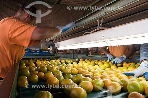 Assunto: Galpão de seleção de citros para mercado / Local: Limeira - São Paulo (SP) - Brasil / Data: 09/2010