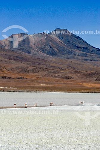 Assunto: Laguna Hedionda - Reserva Nacional Eduardo Avaroa - A caminho do Salar de Uyuni  / Local: Bolívia - América do Sul / Data: 01/2011