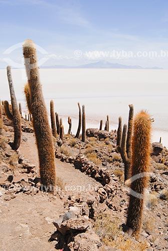 Assunto: Cactus Gigantes da Isla Incahuasi no meio do Salar de Uyunihttp: / Local: Bolívia - América do Sul / Data: 01/2011