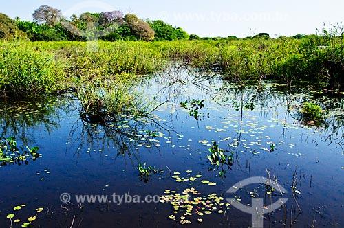 Assunto: Área alagada do Pantanal / Local: Corumbá - Mato Grosso do Sul (MS) - Brasil / Data: 10/2010
