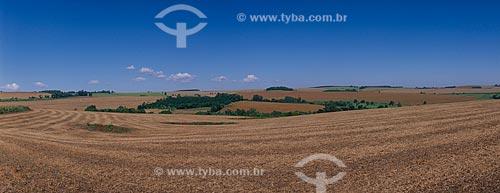 Assunto: Plantação de soja  / Local: São Luís Gonzaga - Rio Grande do Sul (RS) - Brasil / Data: 2010