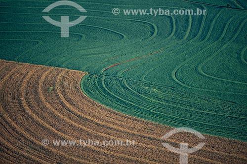Assunto: Plantação de milho e soja / Local: Campo Mourão - Paraná  (PR) - Brasil / Data: 2008