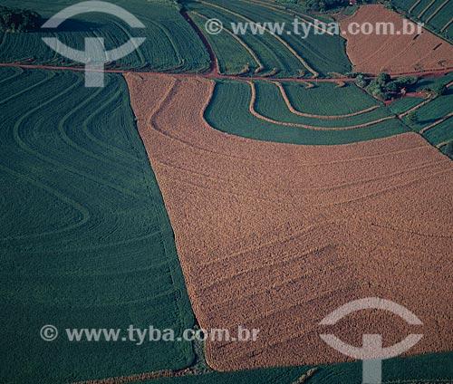 Assunto: Plantação de soja  e milho  / Local: Campo Mourão - Paraná (PR) - Brasil / Data: 2008