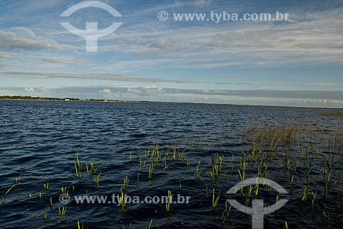 Assunto: Lagoa Custódia - Banhados no litoral norte (áreas alagadas permanente ou temporariamente)   / Local: Tramandaí - Rio Grande do Sul (RS) - Brasil / Data: 09/2009