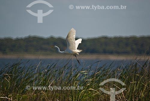 Assunto: Garça branca na Lagoa Custódia - Banhados no litoral norte (áreas alagadas permanente ou temporariamente)   / Local: Tramandaí - Rio Grande do Sul (RS) - Brasil / Data: 10/2009