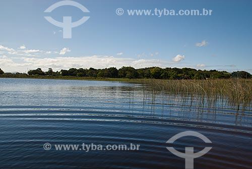 Assunto: Lagoa Custódia - Banhados no litoral norte (áreas alagadas permanente ou temporariamente)   / Local: Tramandaí - Rio Grande do Sul (RS) - Brasil / Data: 10/2009