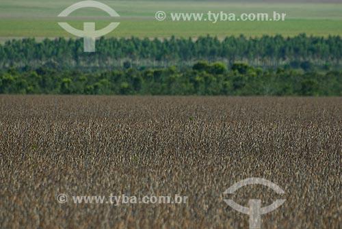 Assunto: Plantação de soja com mata nativa ao fundo / Local: Distrito Baús - Costa Rica - Mato Grosso do Sul (MS) - Brasil / Data: 02/2010