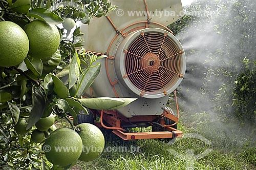 Assunto: Plantação de laranja / Local: Limeira - São Paulo (SP) - Brasil / Data: 02/2006