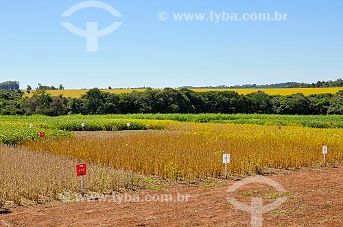Assunto: Ensaios de soja seca - Estação experimental / Local: Não-me-Toque - Rio Grande do Sul (RS) - Brasil / Data: 03/2011