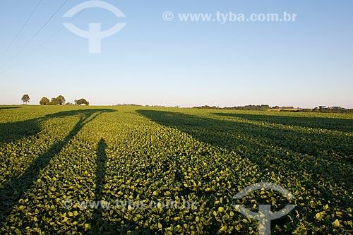 Assunto: Plantação de soja  / Local: Não-me-Toque - Rio Grande do Sul (RS) - Brasil / Data: 03/2011