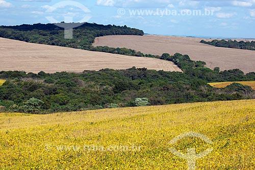Assunto: Plantação de soja com floresta de reserva legal ao fundo / Local: Carazinho - Rio Grande do Sul (RS) - Brasil / Data: 04/2011