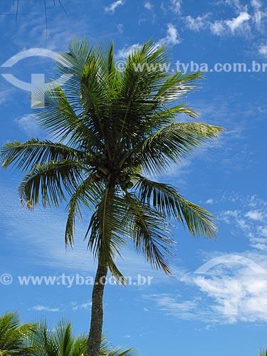 Assunto: Coqueiro na Praia do Tanguá / Local: Angra dos Reis - Rio de Janeiro (RJ) - Brasil / Data: 10/2011