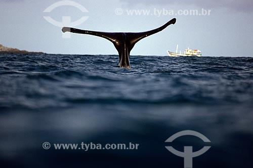 Assunto: Cauda de Baleia Jubarte com barco ao fundo / Local: Abrolhos - Bahia (BA) - Brasil / Data: 2005