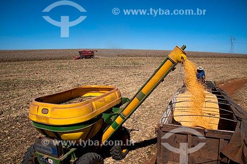 Assunto: Descarregamento de milho / Local: Capão Bonito do Sul - Rio Grande do Sul (RS) - Brasil / Data: 04/2011