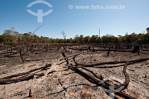 Assunto: Área queimada para subsistência dos índios / Local: Querência - Mato Grosso (MT) - Brasil / Data: 07/2011