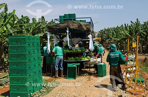 Assunto: Equipamento de beneficiamento de bananas durante a colheita no Projeto Jaíba - Projeto de irrigação com captação de água do Rio São Francisco / Local: Distrito Mocambinho - Jaíba - Minas Gerais (MG) - Brasil / Data: 09/2011