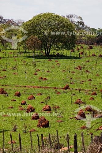 Assunto: Cupinzeiros / Local: Brumadinho - Minas Gerais (MG) - Brasil / Data: 11/2011