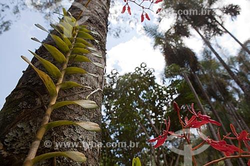 Assunto: Árvore em Inhotim ? Instituto de Arte Contemporânea e Jardim Botânico  / Local: Brumadinho - Minas Gerais (MG) - Brasil / Data: 11/2011
