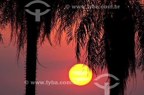Assunto: Macaúba ou Bocaiúva (Acrocomia aculeata) ao pôr do sol / Local: Bonito - Mato Grosso do Sul (MS) - Brasil / Data: 10/2010