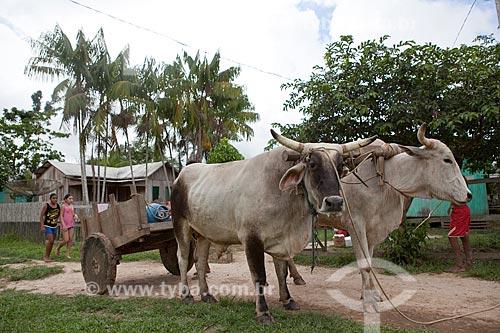 Assunto: Carro de Boi - Reserva Extrativista Cazumbá / Local: Sena Madureira - Acre (AC) - Brasil / Data: 11/2011