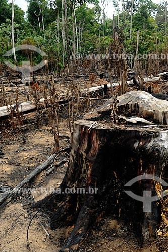 Assunto: Queimada de Floresta às margens da Rodovia AM-352 / Local: Novo Airão - Amazonas (AM) - Brasil / Data: 11/2010