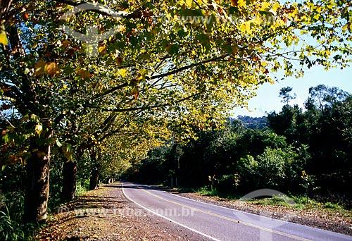 Assunto: Estrada Rota Romântica na BR-116 / Local: Nova Petrópolis - Rio Grande do Sul (RS) - Brasil / Data: 06/2010