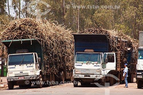 Assunto: Transporte de cana de açúcar na Usina de Cogeração (Açúcar, Etanol e Energia elétrica) da empresa Guarani  / Local: Olímpia - São Paulo (SP) - Brasil  / Data: 09/2011
