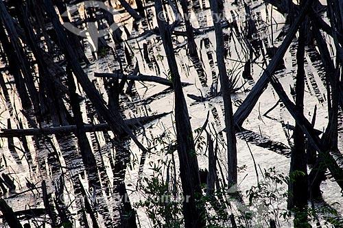 Assunto: Floresta queimada na estrada Manaus - Itacoatiara ( AM - 010 ) - KM 182 sentido Itacoatiara / Local: Amazonas (AM) - Brasil / Data: 10/2011