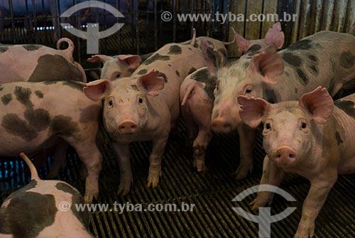 Assunto: Criação de suínos / Local: Lajeado - Rio Grande do Sul (RS) - Brasil / Data: 2010