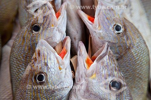 Assunto: Peixes a venda no mercado de peixe da Praia do Mucuripe / Local: Fortaleza - Ceará (CE) - Brasil / Data: 11/2011