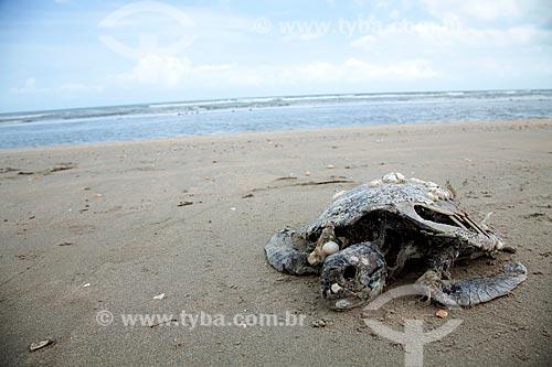 Assunto: Tartaruga morta em praia de Jericoacoara / Local: Jijoca de Jericoacoara - Ceará (CE) - Brasil / Data: 11/2011