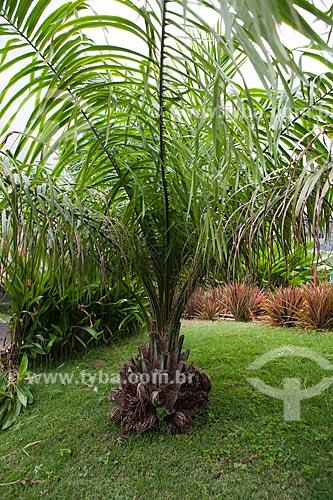 Assunto: Palmeira de Dendê em frente a sede do Núcleo de Estudos e Pesquisas de Agricultura Urbana / Local: Fortaleza - Ceará (CE) - Brasil / Data: 10/2011