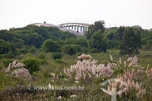 Assunto: Capim-dos-pampas - Gynerium argenteum  com Ponte Alberto Pasqualini e Ponte Leo Guedes ao fundo / Local: Pelotas - Rio Grande do Sul (RS) - Brasil / Data: 02/2012