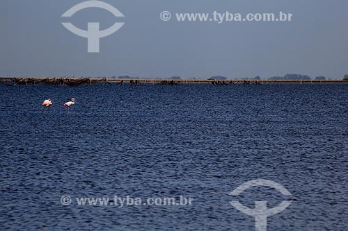 Assunto: Flamingos na Lagoa do Peixe  / Local: Tavares - Rio Grande do Sul (RS) - Brasil / Data: 02/2012