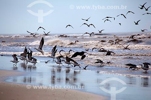 Assunto: Gaivotas na praia do Balneário Mostardense  / Local: Mostardas - Rio Grande do Sul (RS) - Brasil / Data: 02/2012
