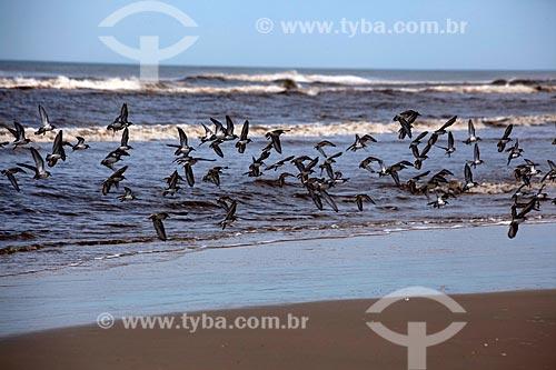 Assunto: Aves na praia do Balneário Mostardense  / Local: Mostardas - Rio Grande do Sul (RS) - Brasil / Data: 02/2012