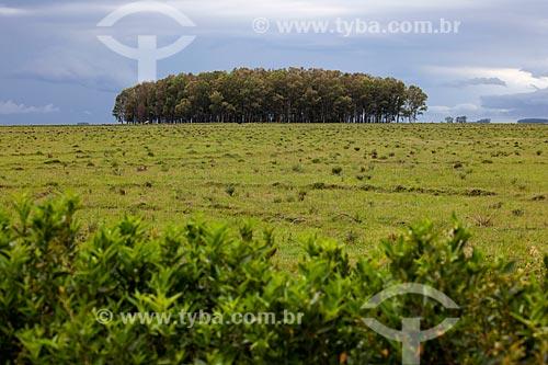 Assunto: Estação Ecológica do Taim / Local: Santa Vitória do Palmar - Rio Grande do Sul (RS) - Brasil / Data: 02/2012