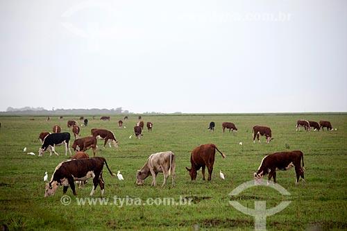 Assunto: Criação de gado na Estação Ecológica do Taim / Local: Santa Vitória do Palmar - Rio Grande do Sul (RS) - Brasil / Data: 02/2012
