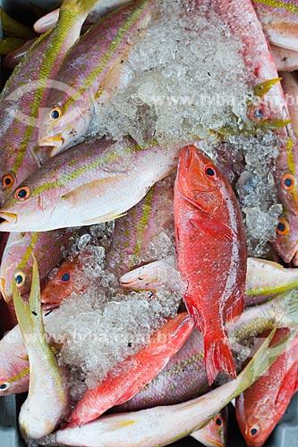 Assunto: Peixe Guaiúba (Ocyrus chrysurus) e Peixe Baúna (Lutjanus alexandrei) com cor vermelha à venda no Porto de Natal  / Local: Natal - Rio Grande do Norte (RN) - Brasil / Data: 03/2012