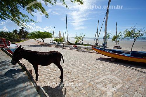 Assunto: Jegue em rua do povoado de Ponta do Mel / Local: Areia Branca - Rio Grande do Norte (RN) - Brasil / Data: 03/2012