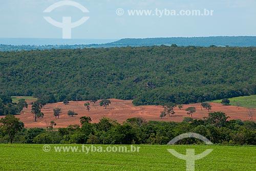 Assunto: Plantação de soja com mata nativa ao fundo / Local: Rondonópolis - Mato Grosso (MT) - Brasil / Data: 12/2011