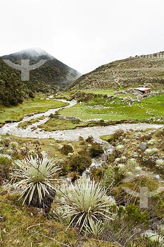 Assunto: Rio de la Culata no Parque Nacional Sierra de la Culata / Local: Mérida - Mérida - Venezuela - América do Sul / Data: 05/2012